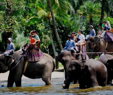 web elephant-ride-bali-tour4