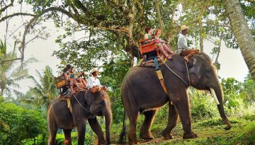 web elephant_ride-3