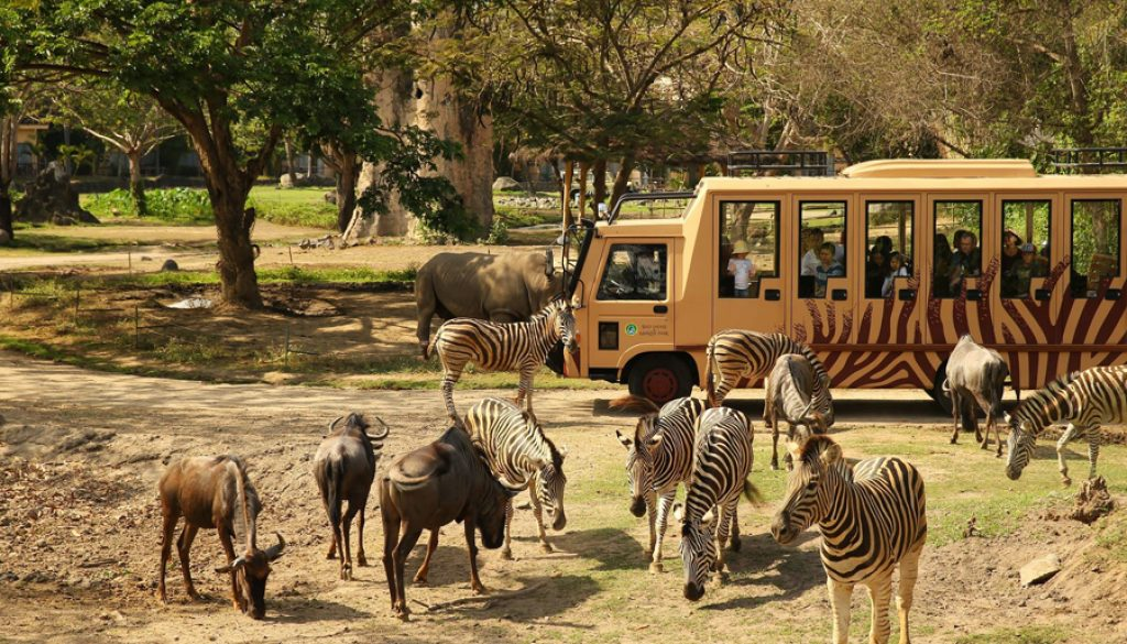 web safari park 2