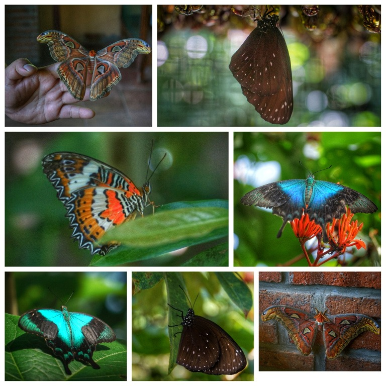 Bali Butterfly Park Tour
